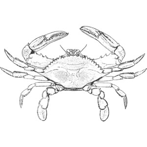 Crab  black and white blue crab clipart black and white clipartfox