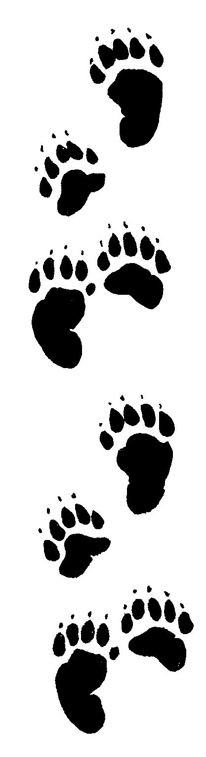 Cub scout bear paw print clipart clipartfest 2