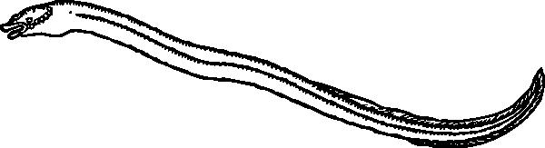 Eel clip art free vector 4vector