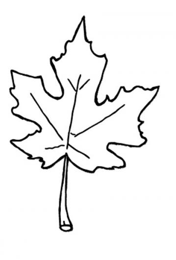Fall  black and white fall leaves clip art black and white 10