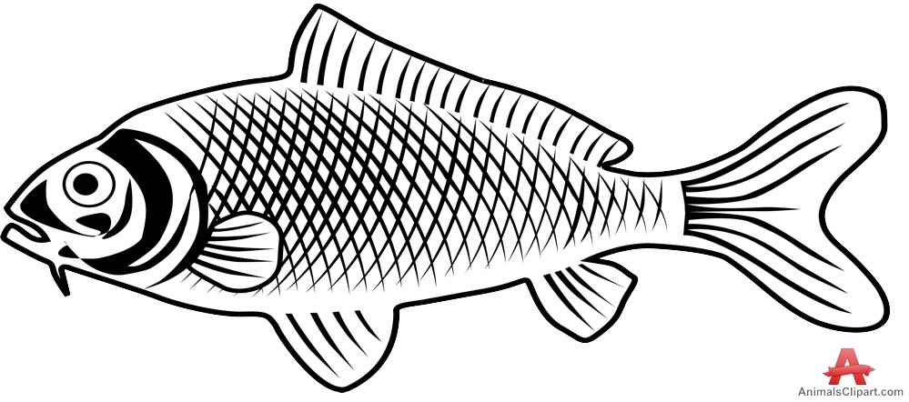 Fish outline freshwater fish clipart outline clipartfest
