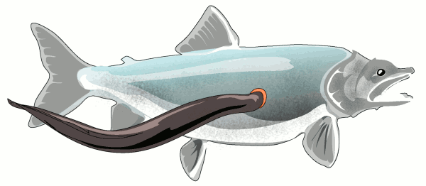 Free eel clipart 1 page of clip art 2
