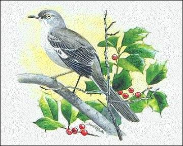 Free mockingbird clipart
