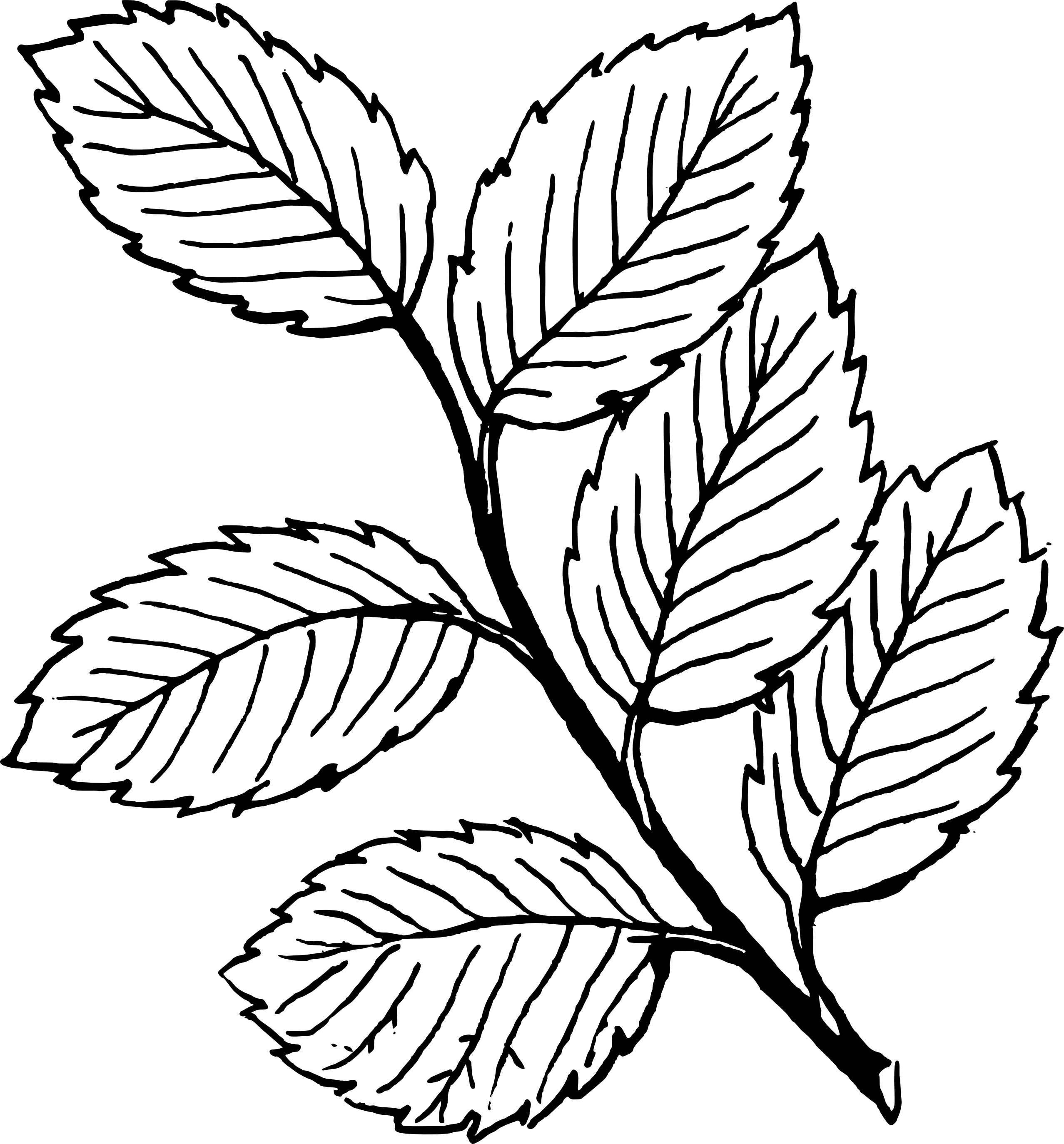 Leaves  black and white fall leaf clipart black and white free