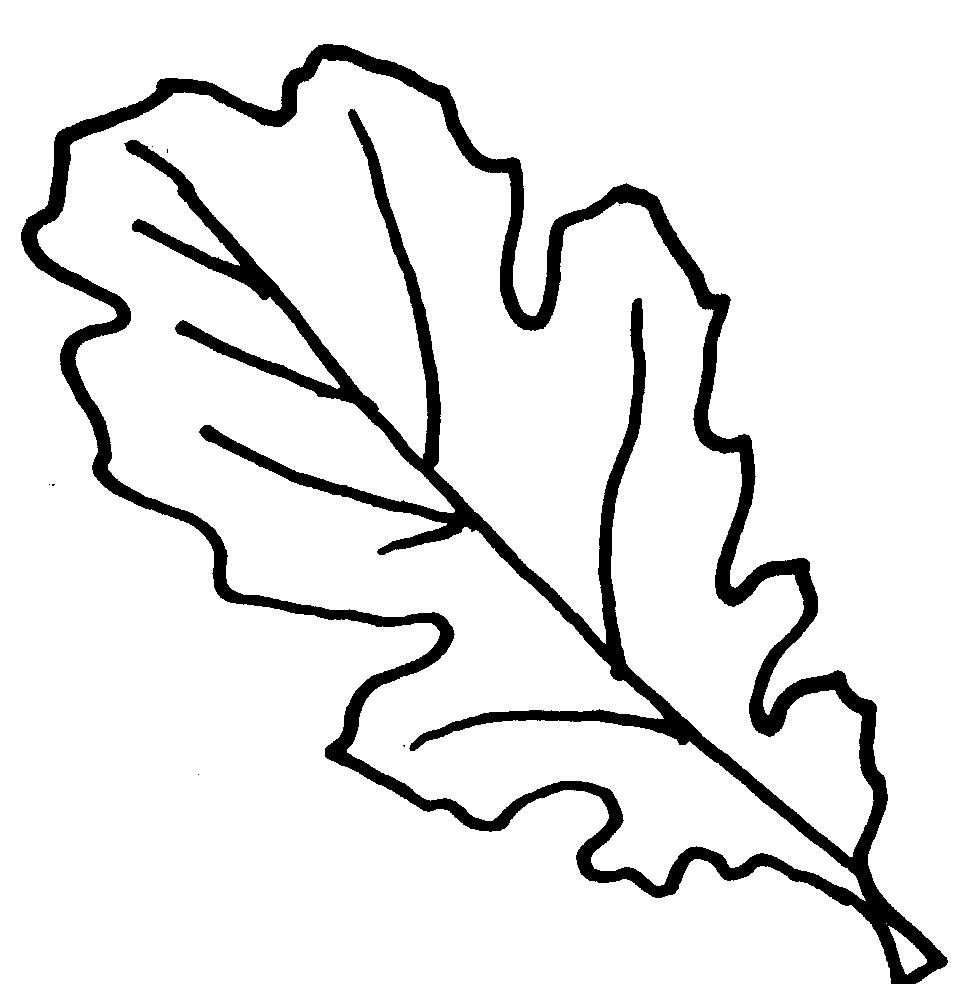 Leaves  black and white free oak leaf clipart 2