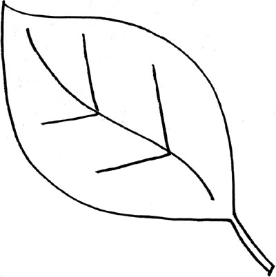 Leaves  black and white leaf outline clip art black and white clipart