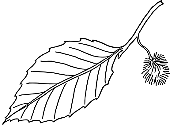 Leaves  black and white leaves clip art black and white free clipart images