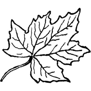 Leaves  black and white maple leaf clipart black and white clipartfest