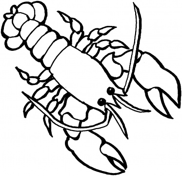 Lobster outline 3