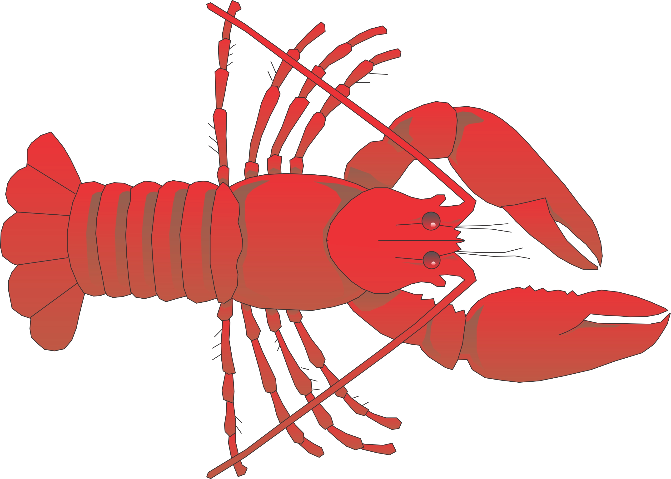 Lobster outline clipart 4