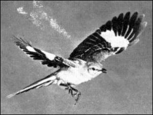 Mockingbird clip art download 3