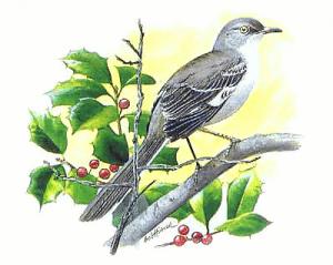 Mockingbird clip art download