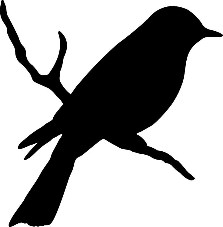 Mockingbird clipart clipart