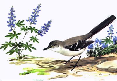 Mockingbird clipart free images 5