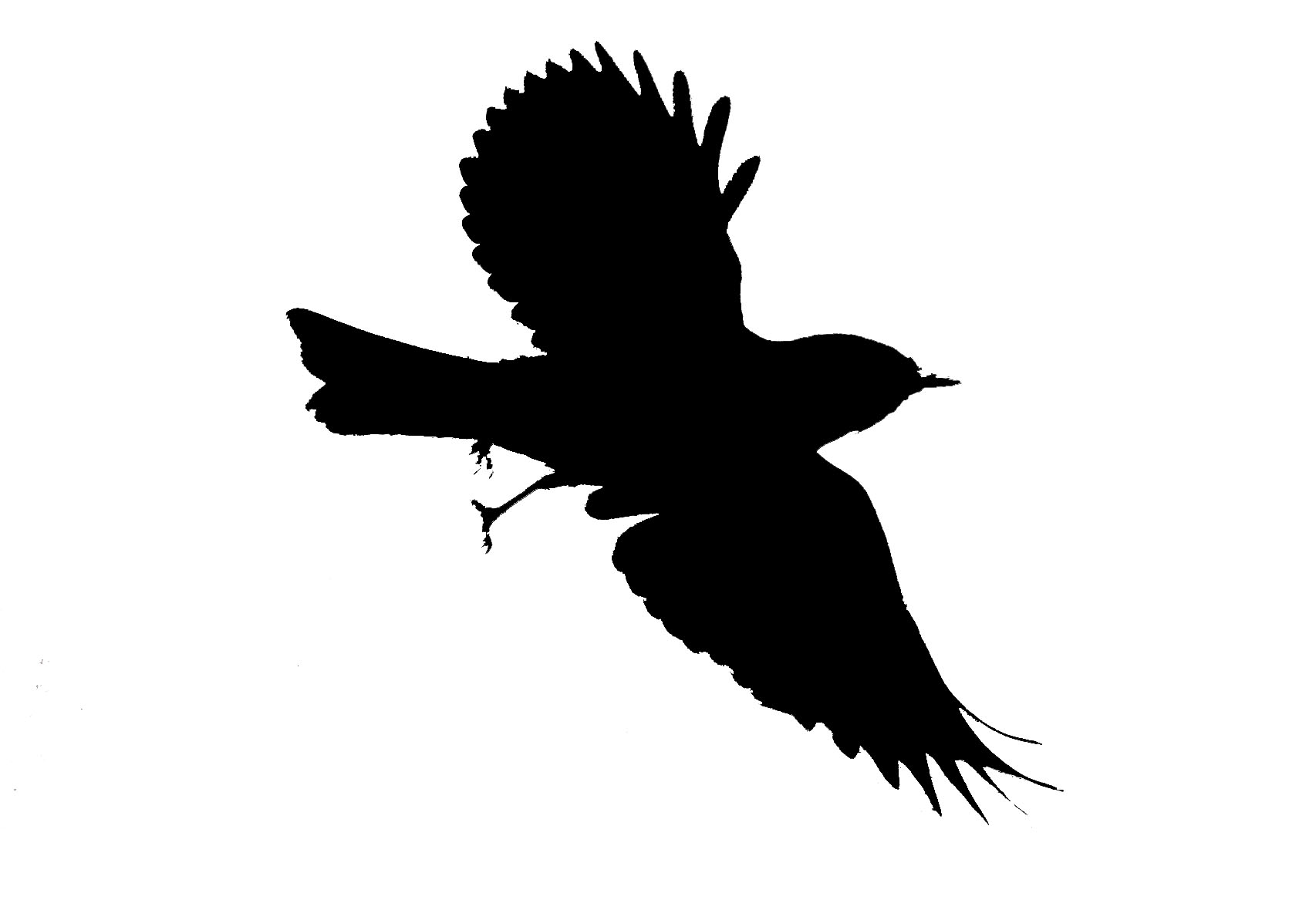 Mockingbird clipart free images 7