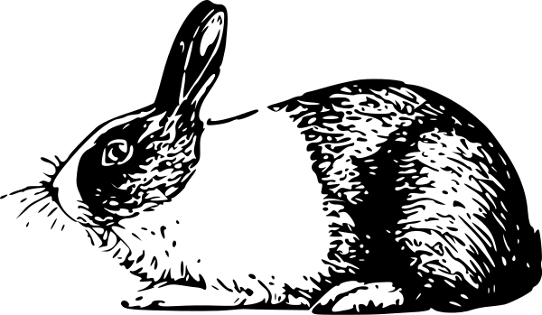 Rabbit  black and white black and white clipart of rabbit clipartfest