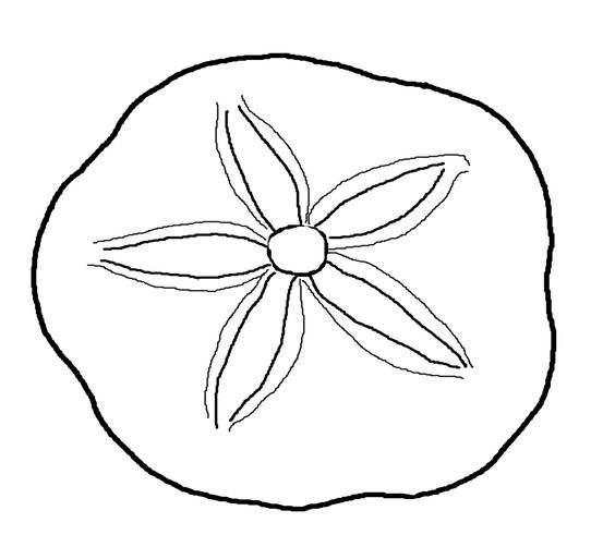 Sand dollar the world clipart