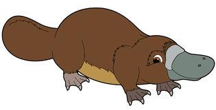 Platypus clipart 2