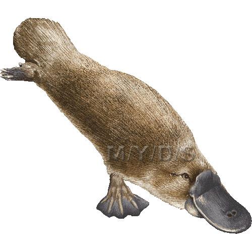 Platypus clipart graphics free clip art