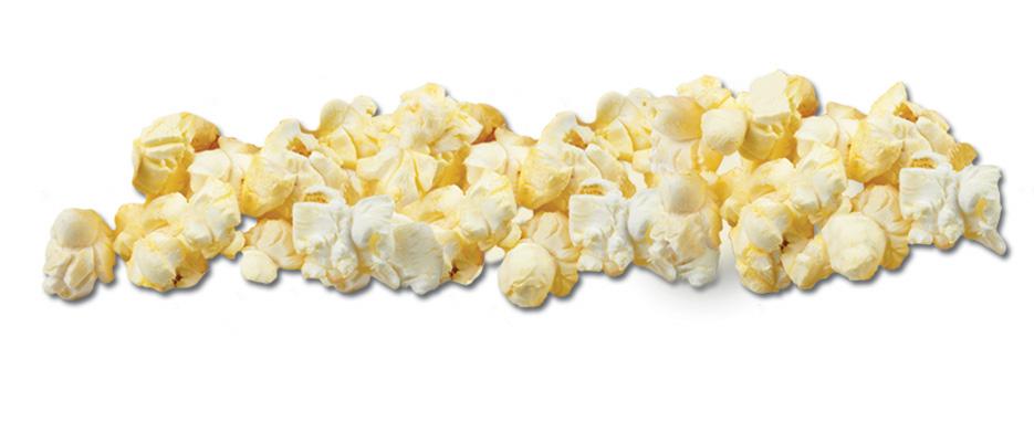 Popcorn kernel clipart free images 9