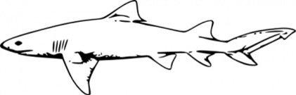 Shark fin clip art download clip arts page 1