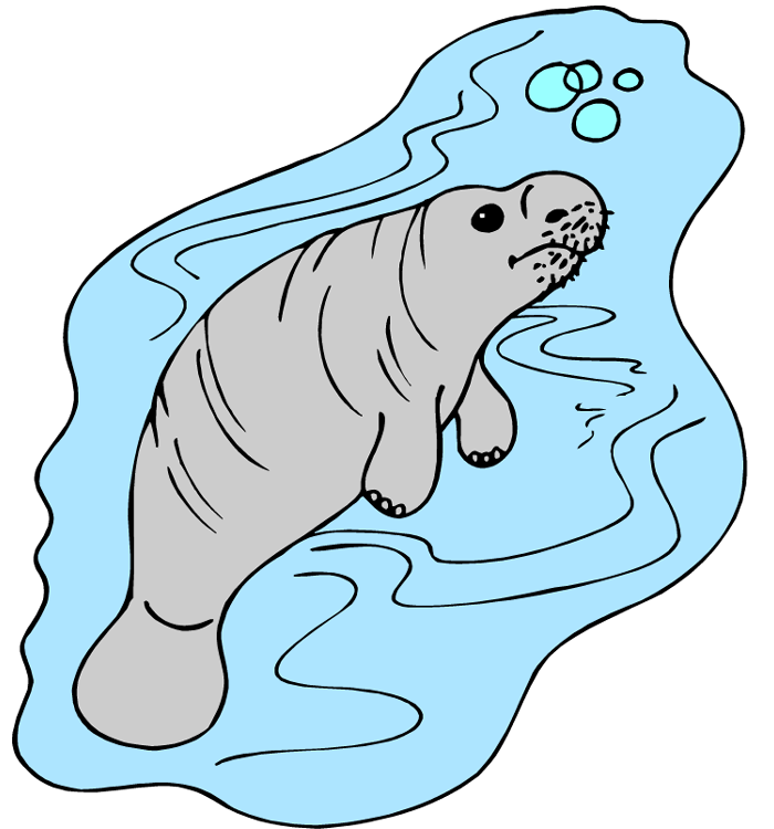 Manatee clipart cliparts and others art inspiration