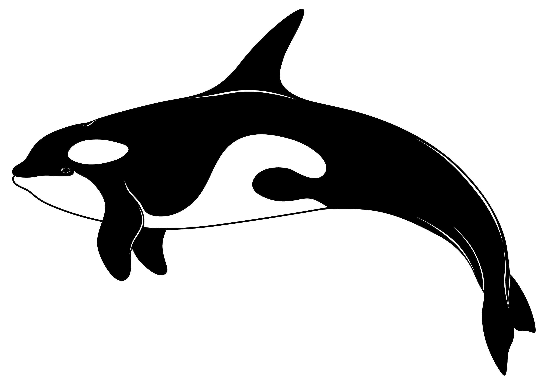 Orca clip art 3