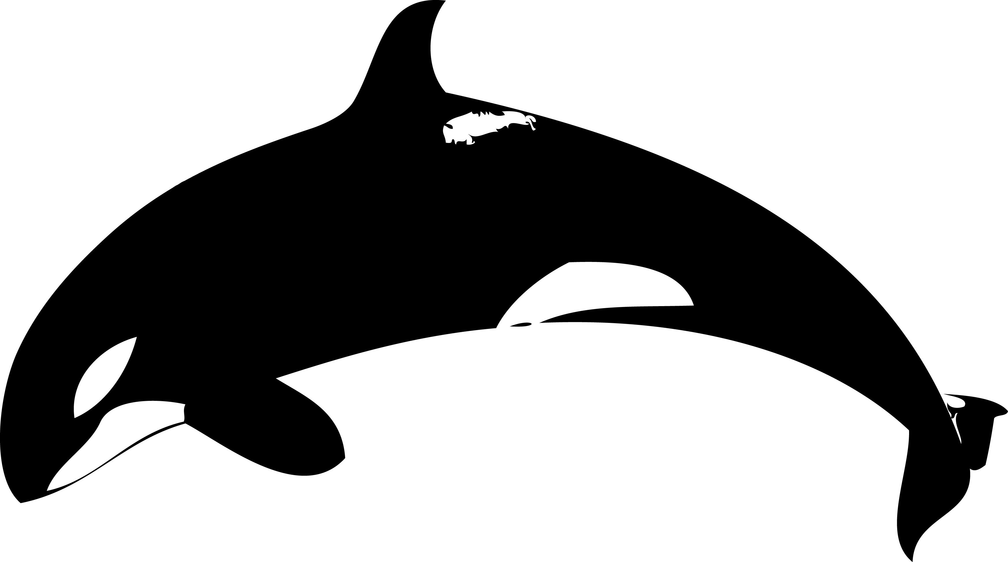 Orca clipart 3