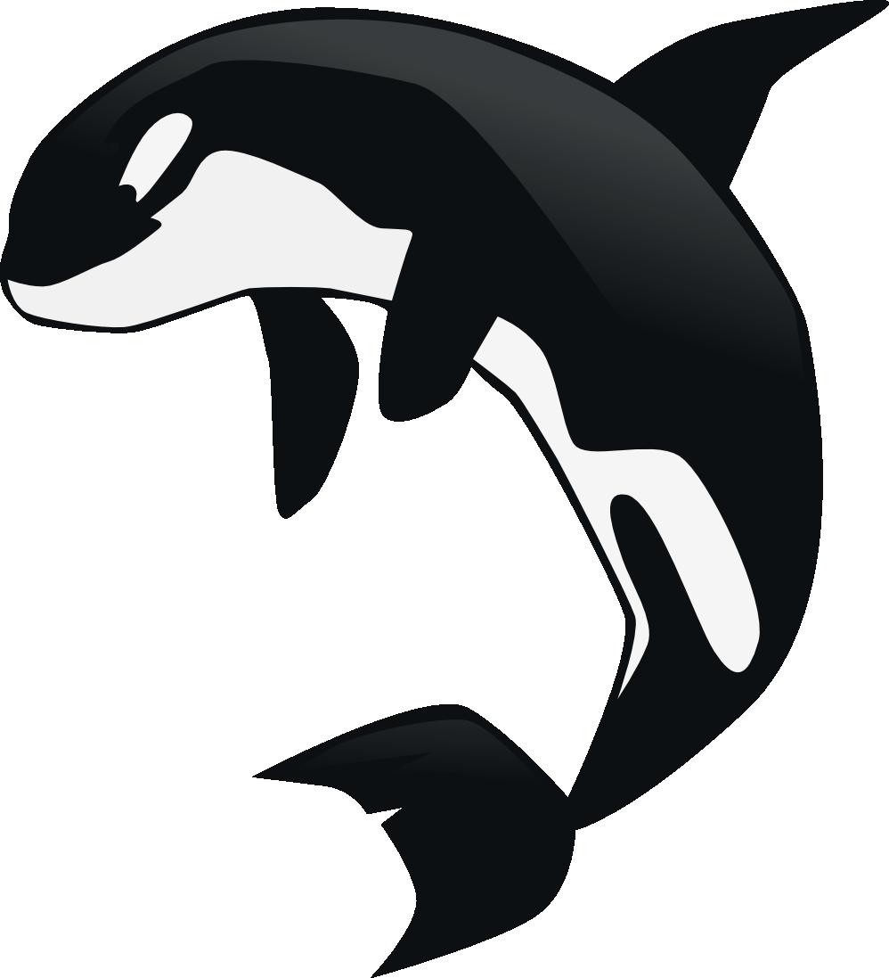 Orca clipart 4