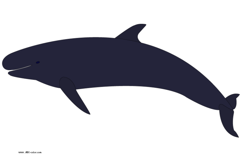 Orca clipart 5 orca clipart fans