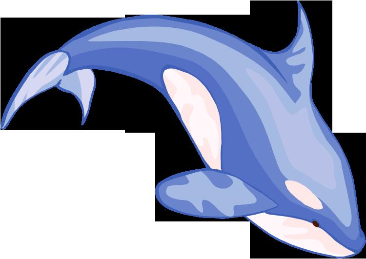 Orca clipart 7