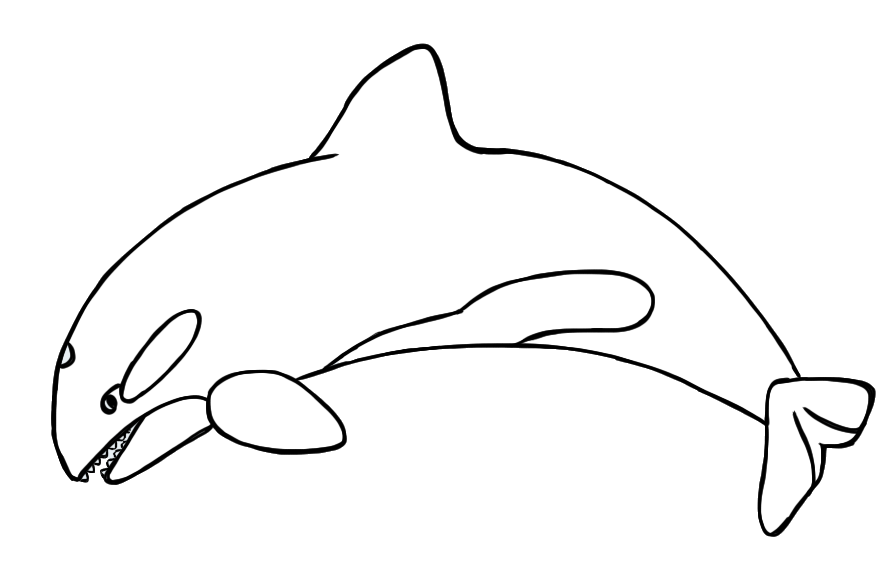 Orca clipart free images