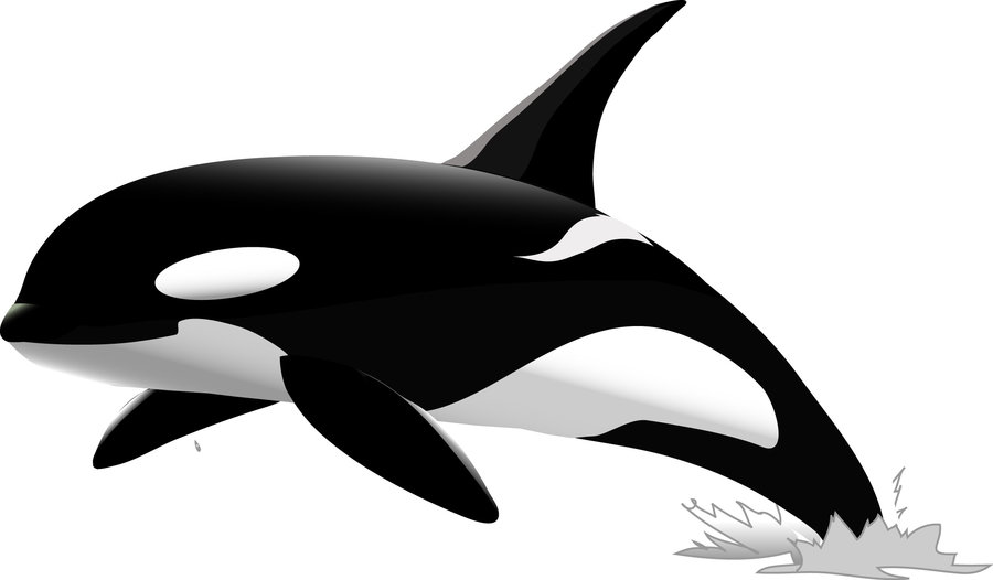 Orca clipart free