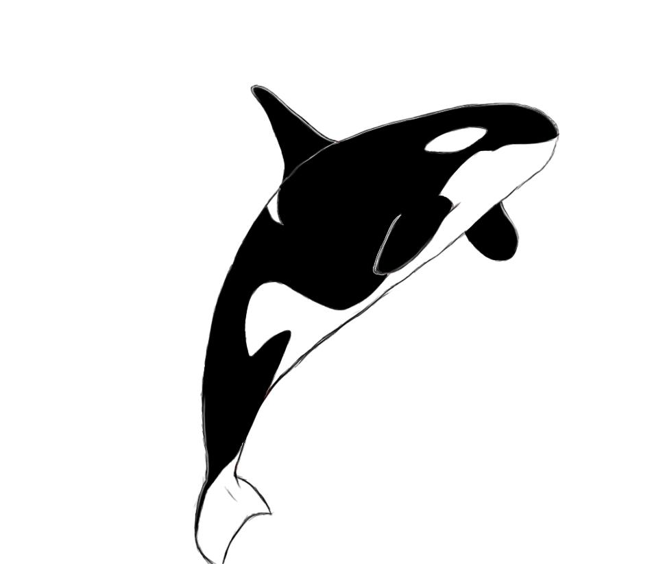 Orca killer whale clipart 2