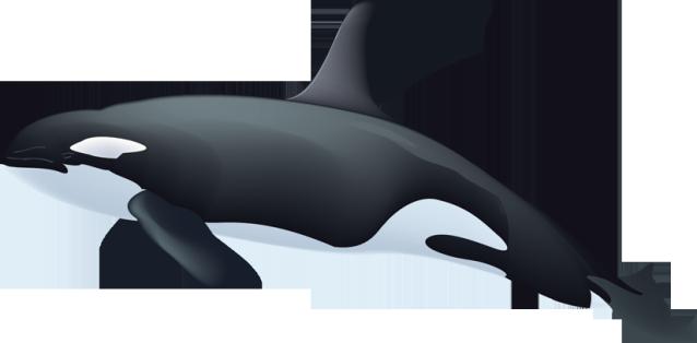 Orca killer whale clipart 3