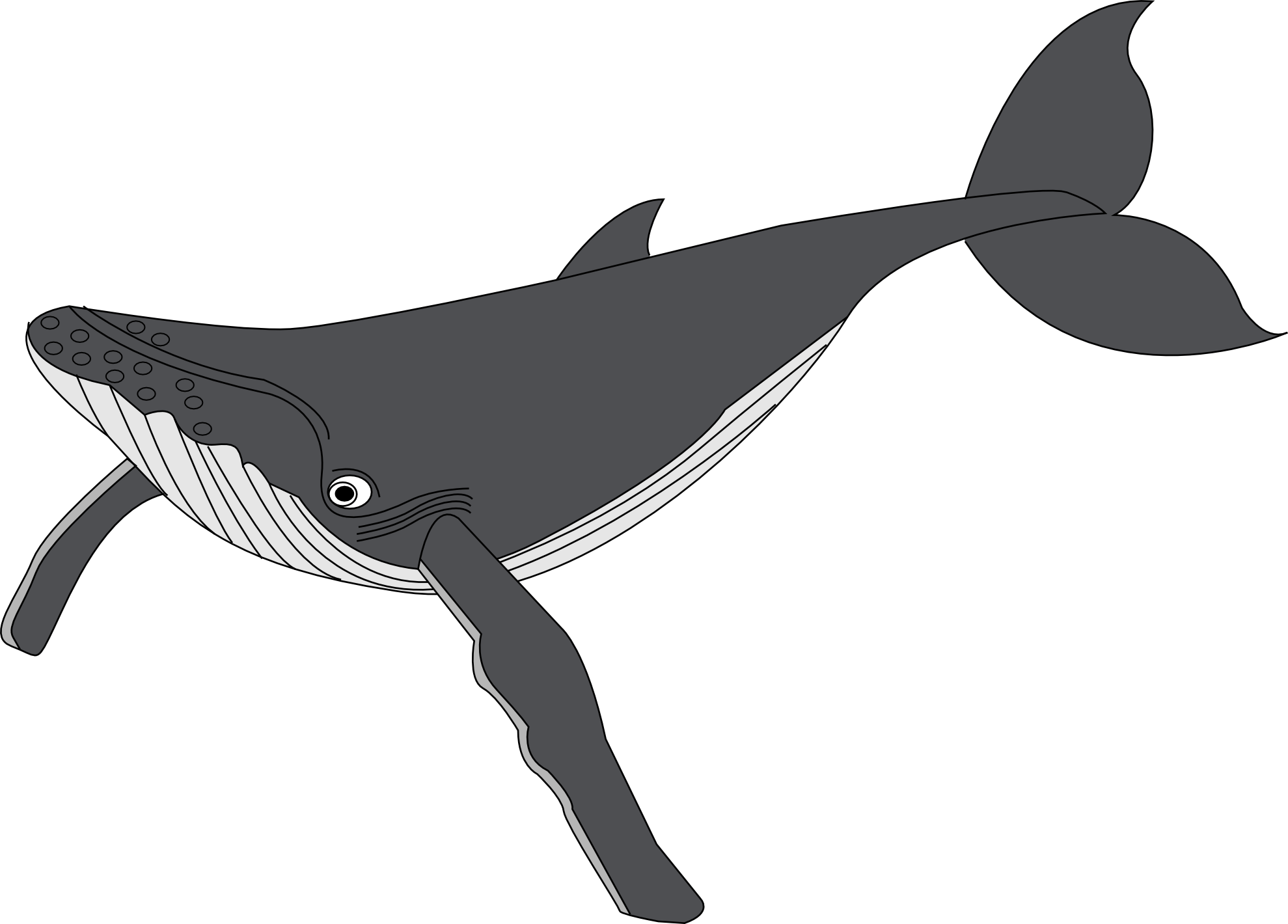 Orca whale clipart free images 2