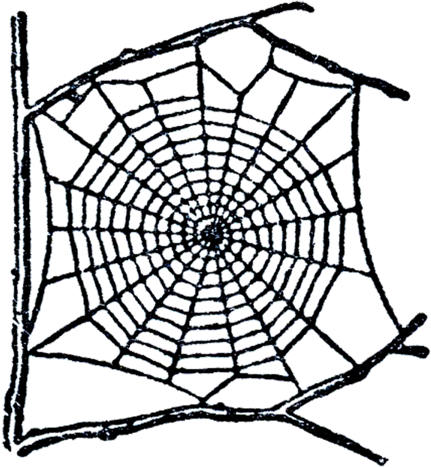 Spider web border clipart free images 4 4