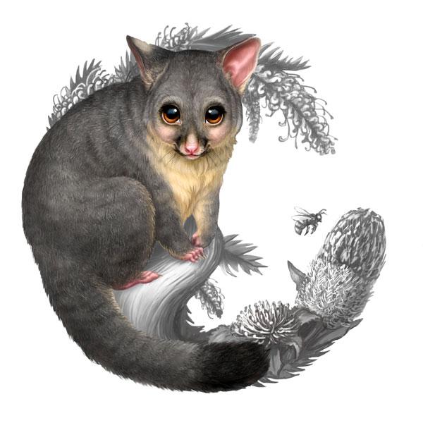 Baby possum clip art clipart download 3