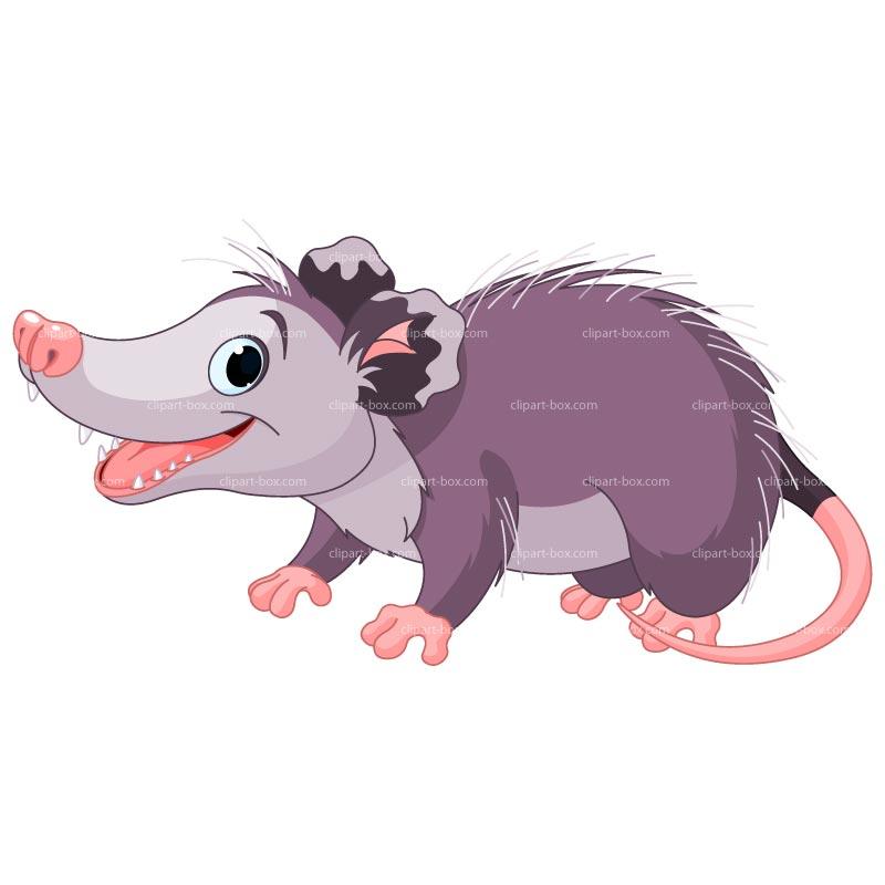 Opossum clip art clipart download
