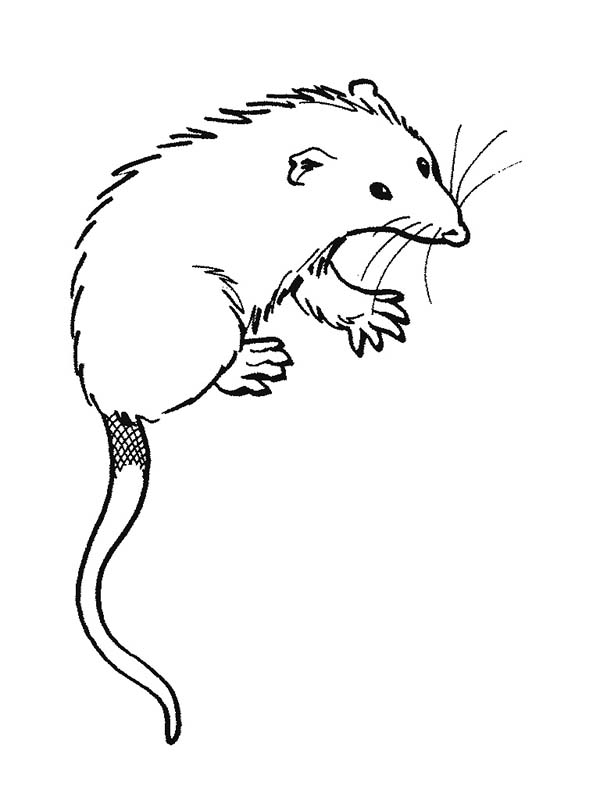 Possum clip art black and white clipart download 2