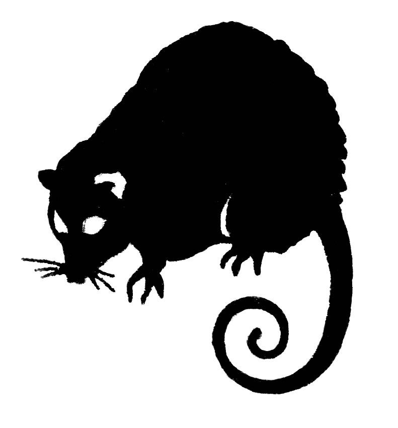 Possum clipart free images 2
