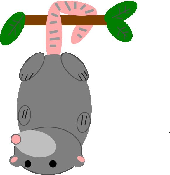 Possum clipart free images