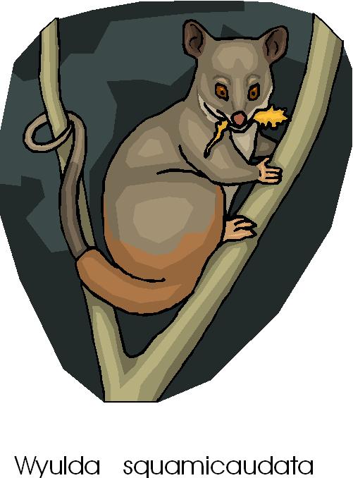 Possum free microsoft clipart february 2