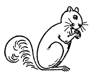 Squirrel  black and white cute squirrel clipart black and white free