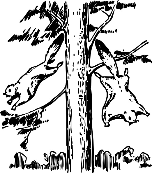 Squirrel  black and white flying squirrels clip art free vector in open office drawing svg