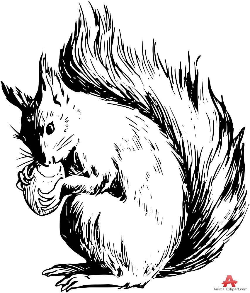 Squirrel  black and white squirrels animals clipart gallery free downloads by 2