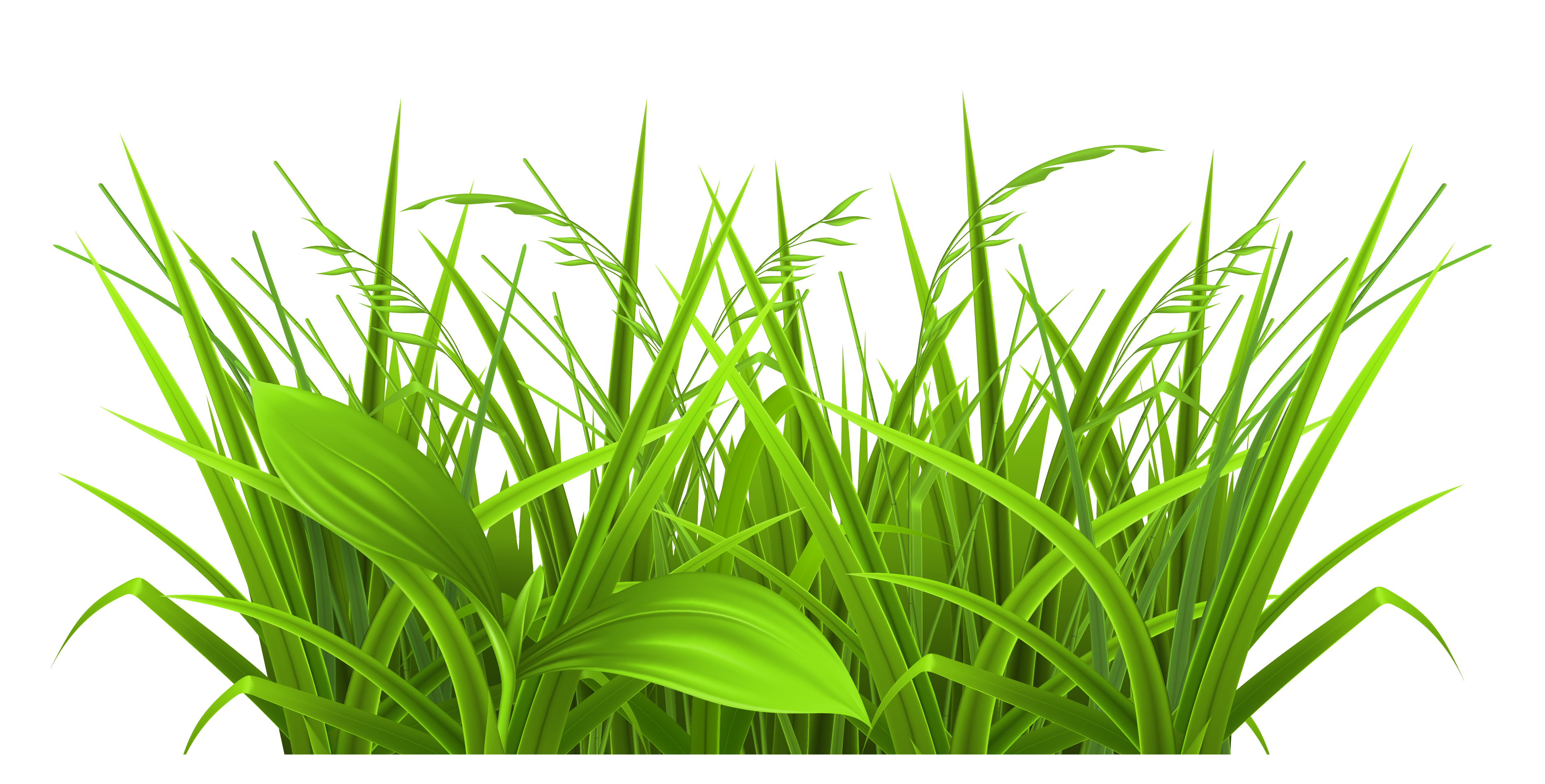Grass  black and white grass clip art images