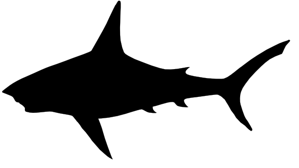 Shark black and white black and white images of sharks free hd wallpaper