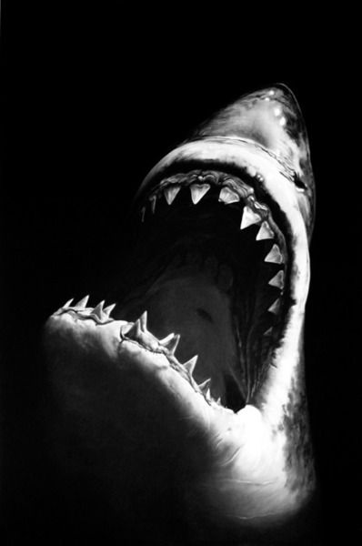 Shark black and white great white shark spectacular black and photo art