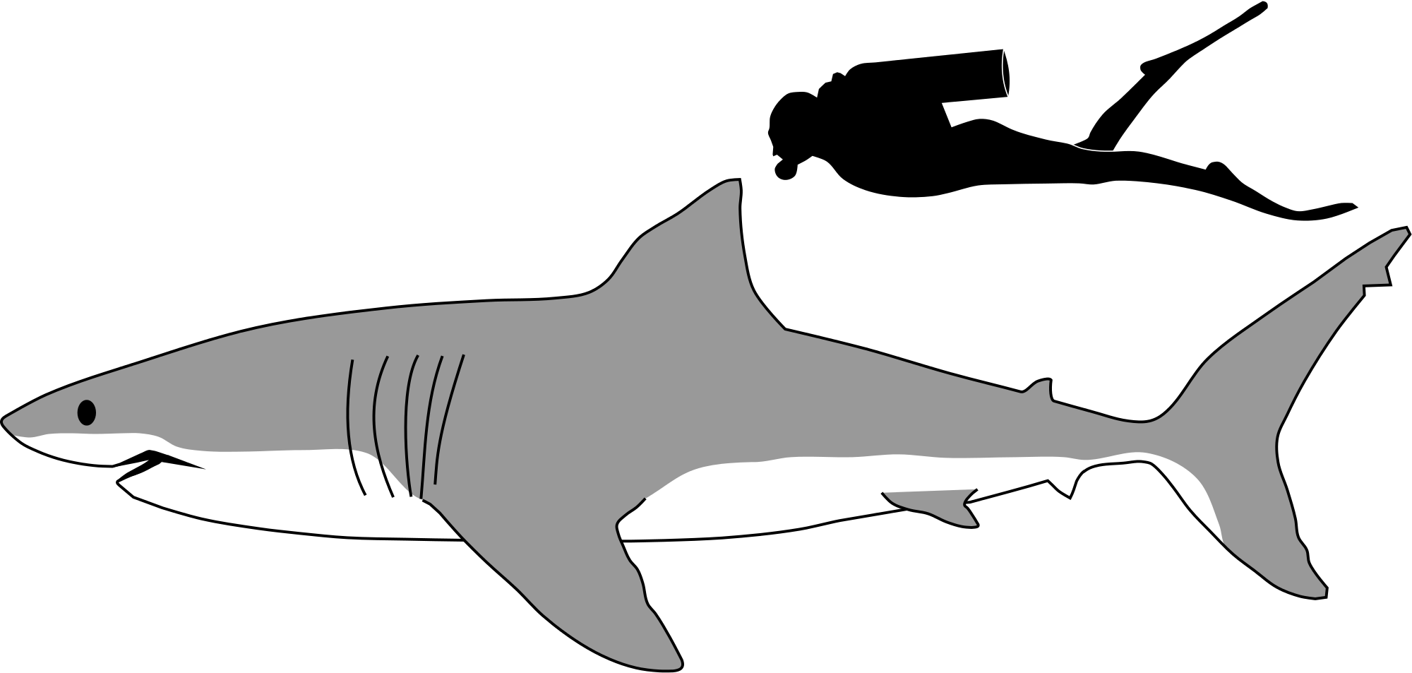 Shark black and white great white shark wikipedia